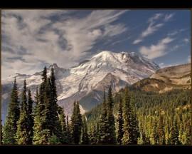 Papel de parede Floresta Com Montanha Com Neve
