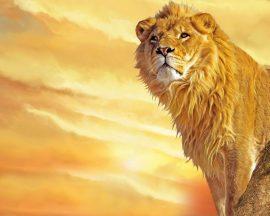 Papel de parede Leão atento