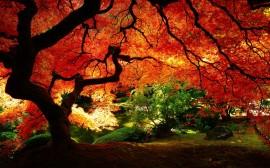 Papel de parede Lindo Outono