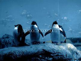 Papel de parede Linux