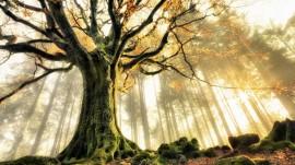 Papel de parede Manhã de Outono na Floresta