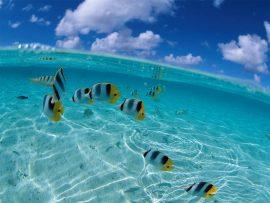 Papel de parede Mar com peixes