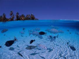 Papel de parede Mar está para peixe