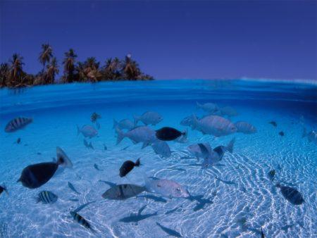 Papel de parede Mar está para peixe para download gratuito. Use no computador pc, mac, macbook, celular, smartphone, iPhone, onde quiser!