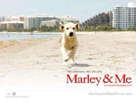 Papel de parede Marley e Eu
