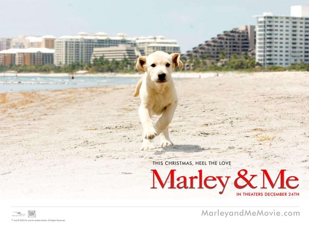 Papel de parede Marley e Eu para download gratuito. Use no computador pc, mac, macbook, celular, smartphone, iPhone, onde quiser!
