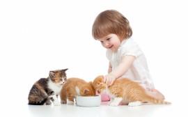 Papel de parede Menina Alimentando Gatos