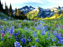 Papel de parede Montanha com Flores