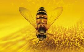 Papel de parede Pegando Néctar