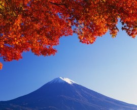 Papel de parede Cerejeira Selvagem e Monte Fuji