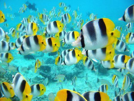 Papel de parede Muitos peixes para download gratuito. Use no computador pc, mac, macbook, celular, smartphone, iPhone, onde quiser!