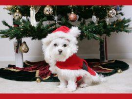 Papel de parede Natal – Cão
