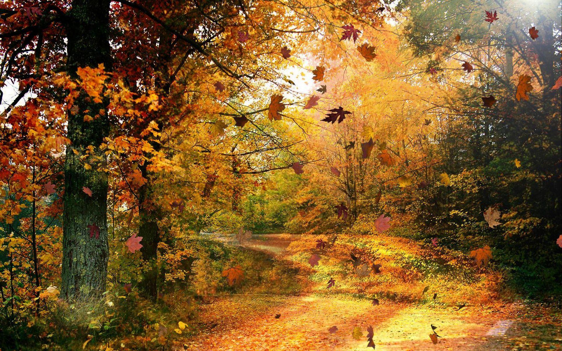 Papel De Parede Natureza No Outono Wallpaper Para Download