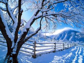 Papel de parede Neve nas árvores