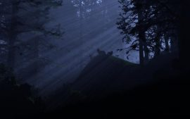 Papel de parede Noite – Lobos