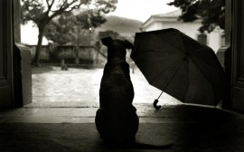 Papel de parede O Cachorro e O Guarda-Chuva