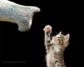 Papel de parede O Gato e o Elefante
