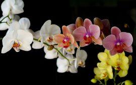 Papel de parede Orquídea – Coloridas