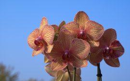 Papel de parede Orquídea – Diferente