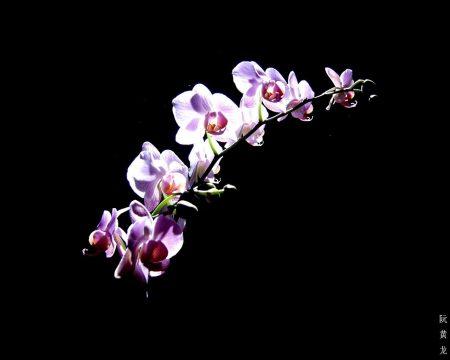 Papel de parede Orquídea – Especial para download gratuito. Use no computador pc, mac, macbook, celular, smartphone, iPhone, onde quiser!