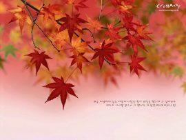 Papel de parede Outono, Bíblia e Folhas