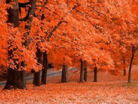 Papel de parede Outono laranja