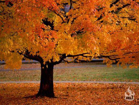 Papel de parede Outono para download gratuito. Use no computador pc, mac, macbook, celular, smartphone, iPhone, onde quiser!