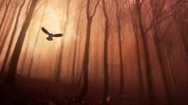 Papel de parede Coruja Voando em uma Floresta Sombria
