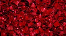 Papel de parede Pétalas de Rosas