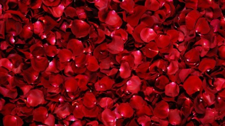 Papel de parede Pétalas de Rosas para download gratuito. Use no computador pc, mac, macbook, celular, smartphone, iPhone, onde quiser!