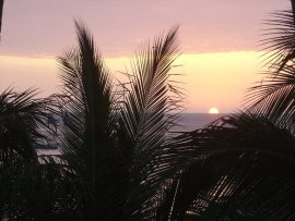 Papel de parede Palmeira e o sol