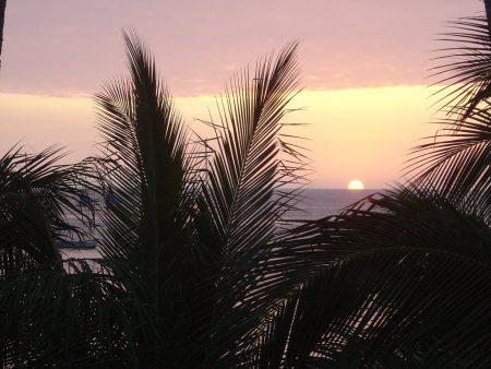 Papel de parede Palmeira e o sol para download gratuito. Use no computador pc, mac, macbook, celular, smartphone, iPhone, onde quiser!