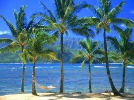 Papel de parede Palmeiras de Kauai
