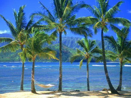 Papel de parede Palmeiras de Kauai para download gratuito. Use no computador pc, mac, macbook, celular, smartphone, iPhone, onde quiser!
