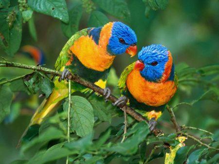 Papel de parede Papagaios para download gratuito. Use no computador pc, mac, macbook, celular, smartphone, iPhone, onde quiser!