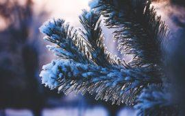 Papel de parede Árvores cobertas de neve