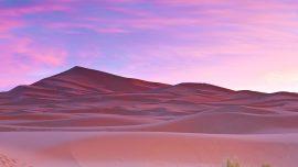 Papel de parede Palmeiras o deserto do Saara…