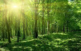 Papel de parede Sol de primavera verde floresta