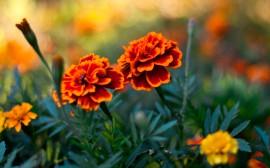 Papel de parede Par de Flores