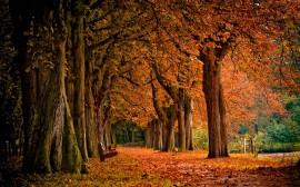 Papel de parede Parque no Outono