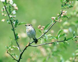Papel de parede Pássaro e flores
