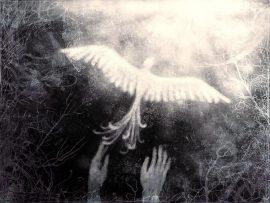 Papel de parede Pássaros – Livre