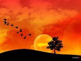 Papel de parede Pássaros – Pôr-do-sol