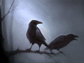 Papel de parede Pássaros na chuva