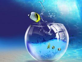 Papel de parede Peixe fora do aquário