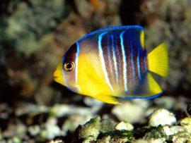 Papel de parede Peixe no mar
