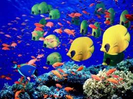 Papel de parede Peixes no Mar