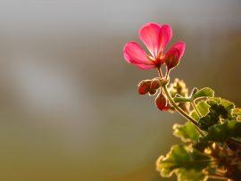 Papel de parede Pequena Flor