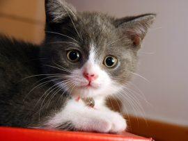 Papel de parede Pequeno Gato