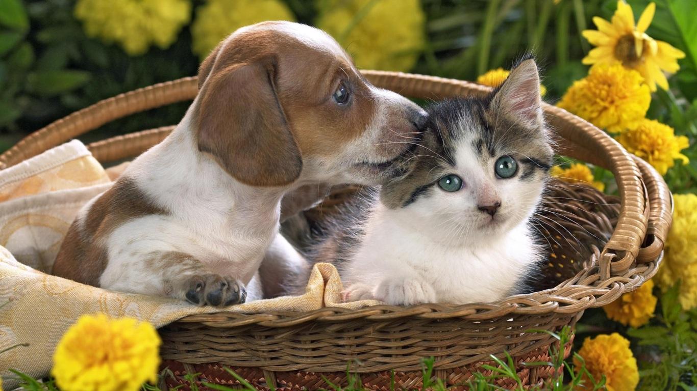 Animals Hd Wallpapers 2015 Funny Kissing Hugging Baby: Papel De Parede Pequenos Amigos Wallpaper Para Download No